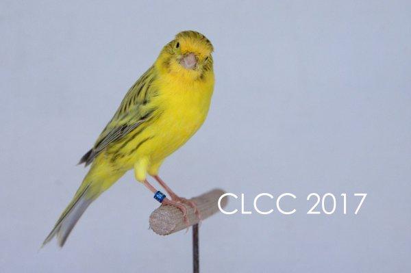 Les BESTS CLCC 2017 !