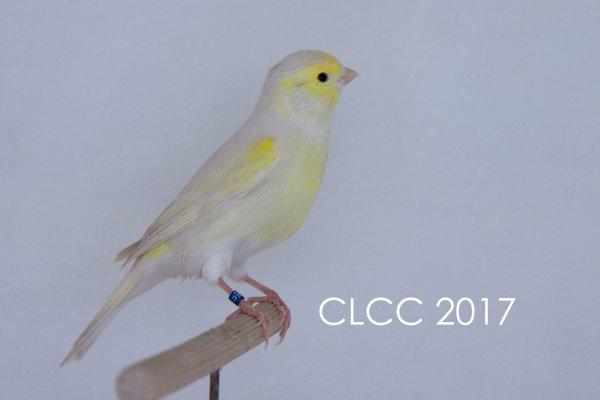 Les BESTS CLCC 2017