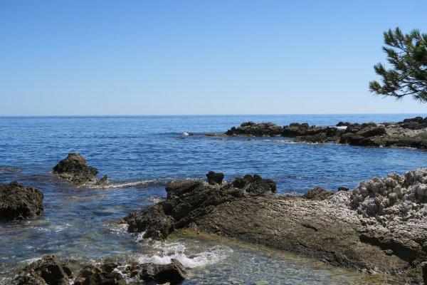 Les lézards se sont bien amusés cet été: en juillet à l'île Sainte Marguerite au large de Cannes