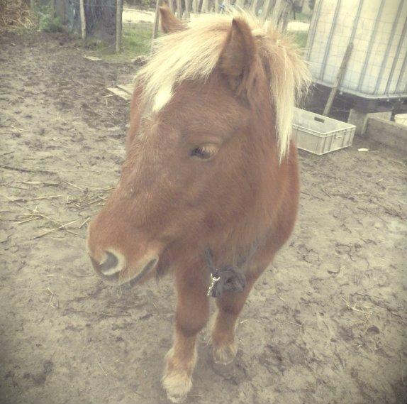 La vue de ce petit cheval m'impressionna d'une manière que je ne puis très bien expliquer. Walt Morey.