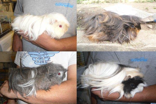 Sally, Framboise, Grisette, Lizzie.
