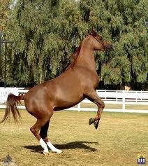 mon cheval  Antoine