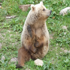 15 juillet 2018: Visite aux oursons