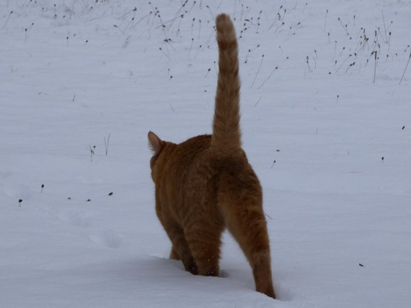 Edgar, le chat des neiges
