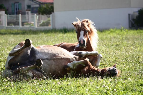 Gros poney que j'aime j'aime j'aime...