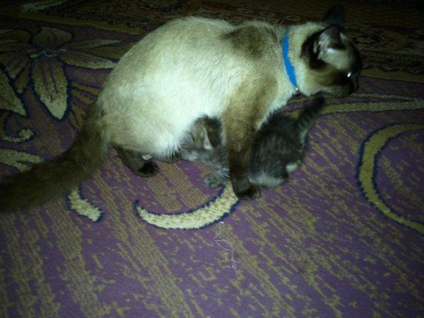 SWEET MIMI & HER BABY