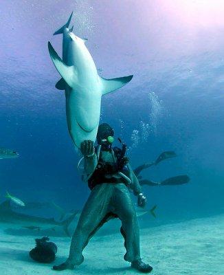 Pourquoi les requins ne sont pas protégés