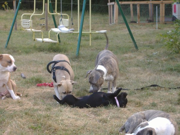 Après la balade peux de chiens tiennent encore debout!!!