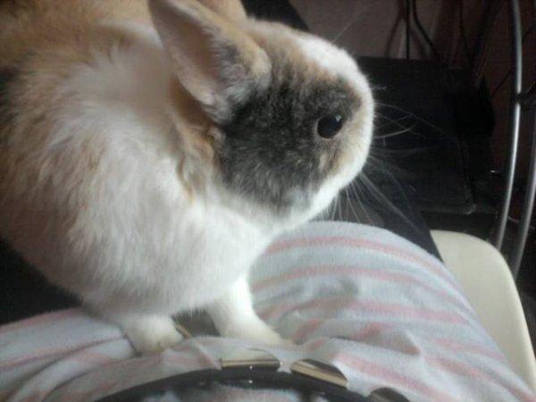 Mon lapin ze t'aimheu ♥♥