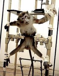 Les animaux dans les laboratoires :