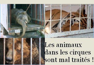Les animaux dans les cirques :