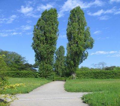 7.2 - Comment  aménager  votre jardin  ?