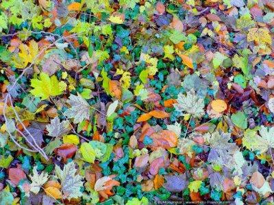 14 - En ratissant des feuilles mortes ...