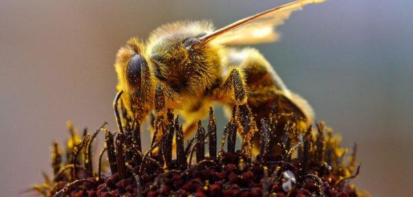 16.2  - Le  Titanic apicole