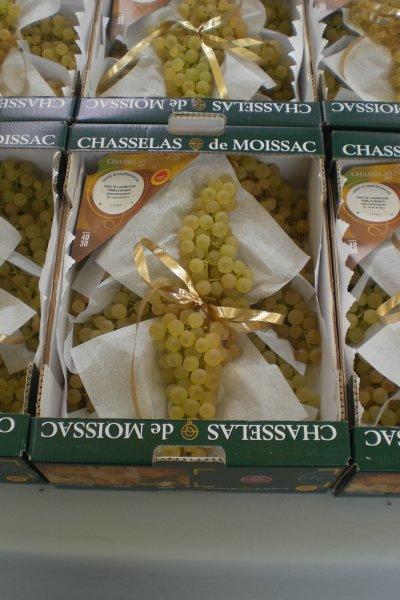 45.1 - Le Chasselas de Moissac - AOC