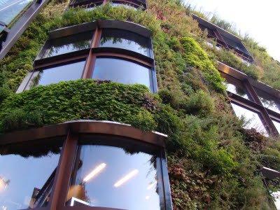 26 - Mur végétal, selon Patrick Blanc