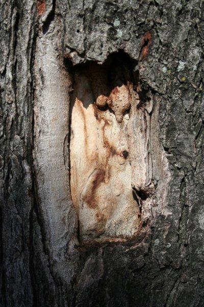 26.3 - A propos de cicatrisant des arbres