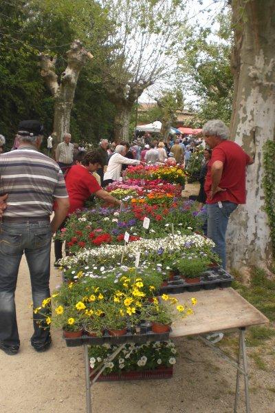 34 - Le plus grand marché  aux fleurs du sud - ouest