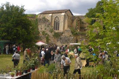 35.2 - Foire aux plantes  à  l'Abbaye  Nouvelle - Succulentes