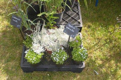 35.3 - Foire aux plantes à  l'Abbaye Nouvelle - Plantes tapissantes