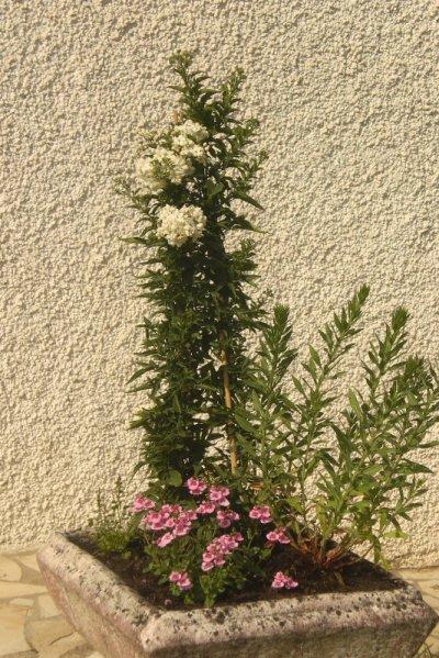 38.4 - Compositions florales du jardinier du  82
