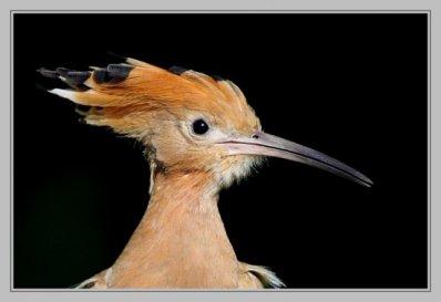 16.4  - Quizz Biodiversité -  de l'INRA