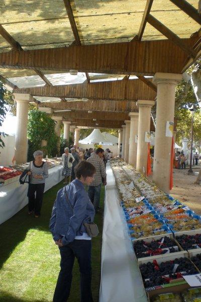 45.2 - Chasselas & terroir en fête les 18 & 19 septembre 2010