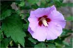 26.2  - Quand tailler les arbustes à fleurs  ?