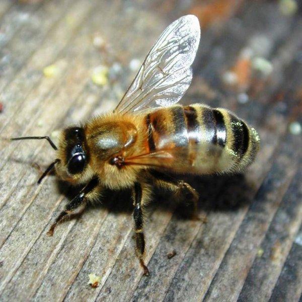 53- Sauver les abeilles ....