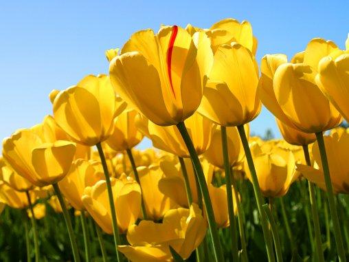56.4  - C'est le printemps...
