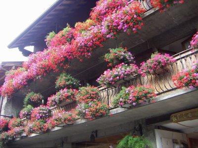 63 - Question de plantes au soleil