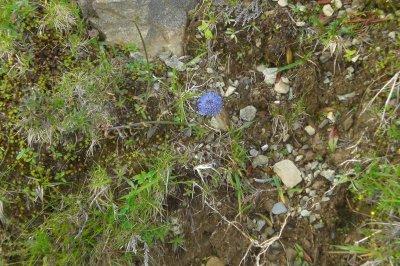 63.3 - Botanique sur  le chemin de l'Arbizon