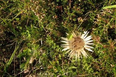 66.3  - Flore, Minéraux   & quête du Grall , vers l'Arbizon ...