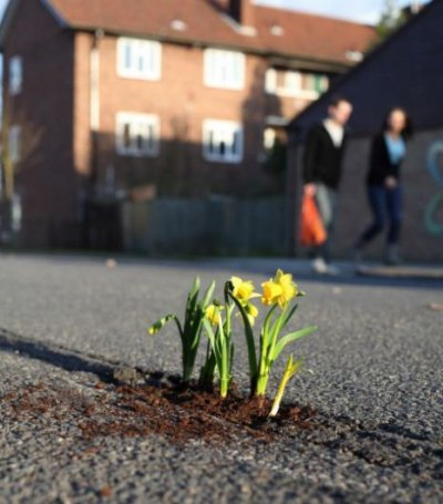 68.1  - The  pothole  gardener  : le jardinier des nids de poules