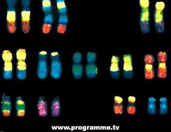72.1 - L'ADN, nos Ancêtres et Nous ....