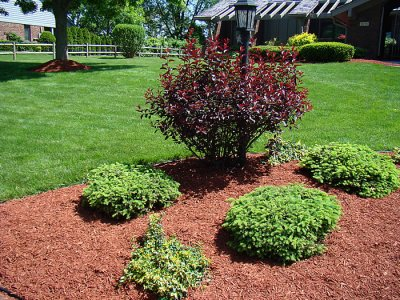 85.1 - Le jardinage sans travail du sol