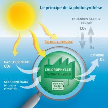 86.4 - Un lampadaire mangeur de CO2 et des arbres fluorescents pour remplacer les réverbères et les arbres à vent  !
