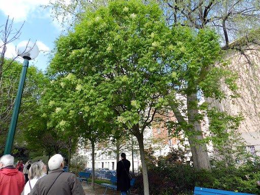 87.2 - Quel est donc   cet arbre?