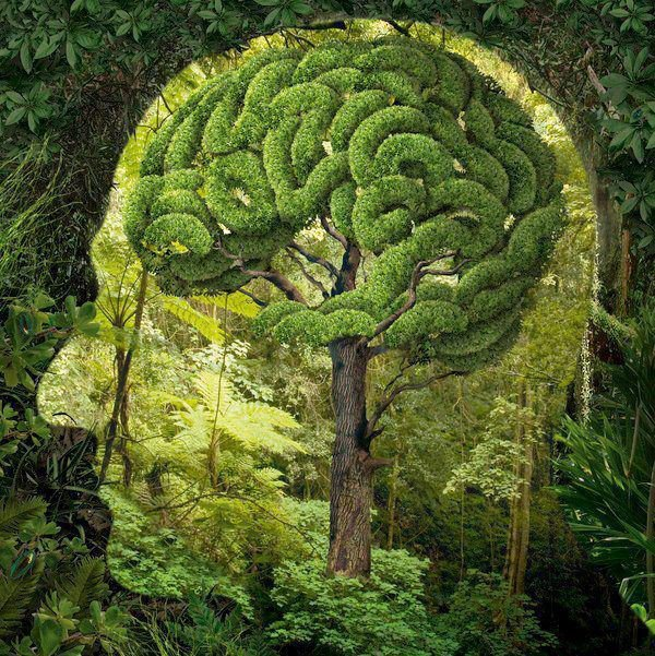 99.3 - Imaginons l'avenir de l'homme par la biodiversité