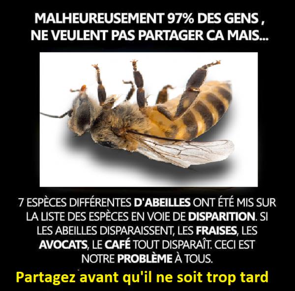 103.2 - Les abeilles ... et santé et Nutrition ....