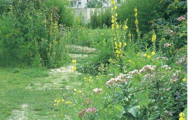 104.1 - Le rêve d'un jardinier - Gilles Clément