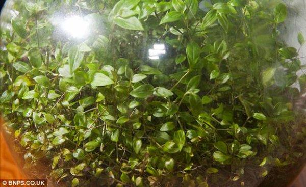 108 - Microcosme végétal ....