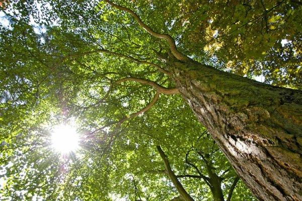 108.2 - Élisez l'arbre de l'année 2013 !