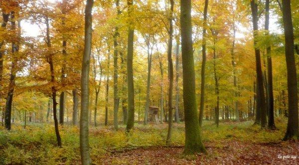 110.2 - La forêt au rythme des quatre saisons