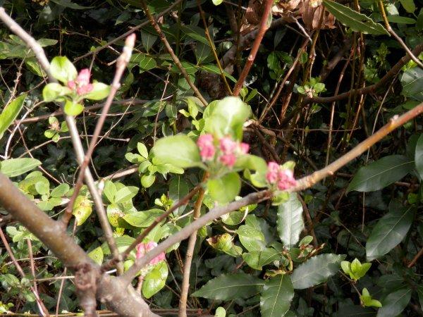 112 - J'ai descendu, dans mon jardin .... le 7 avril