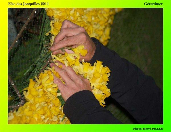 """112.1 - Gérardmer la """"Perle des Vosges"""" fête le printemps chaque année avec des jonquilles...."""