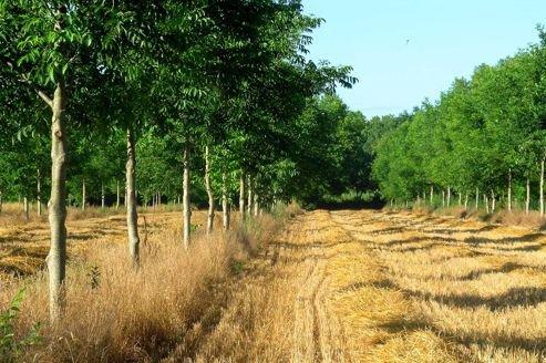 117.3 - La France replante des arbres dans ses champs