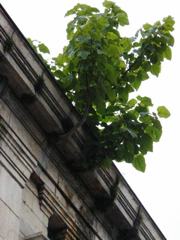 118.3 - Les envahisseurs végétaux  de  Moissac, (suite)
