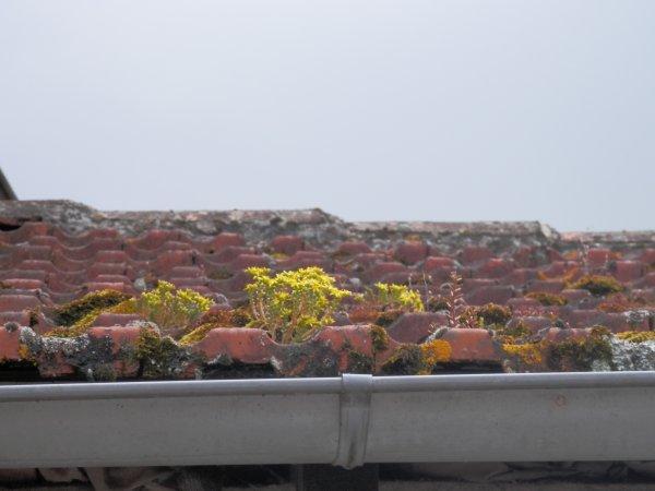 118.4 - Colonisation moissagaise par la flore pionnière ....