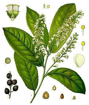119 - Quand tailler arbres et arbustes à floraison printanière ?
